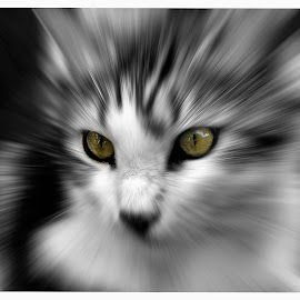 the eyes have it by Sue Rickhuss - Animals - Cats Portraits (  )
