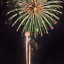 Fireworks by Carol Ward - Public Holidays July 4th ( holiday, alexandria va, park, 4th of july, fireworks, oronoco bay park,  )