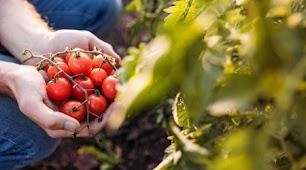 Creen que es muy importante y necesaria la figura del Ingeniero Agrícola.