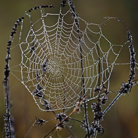 by Siniša Almaši - Nature Up Close Webs ( view, depth, nature, spiderweb, grass, up close, mist, morning, water drops )