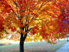 Photo: Yellow, orange, and red leaves at Eastwood Park in Dayton, Ohio.