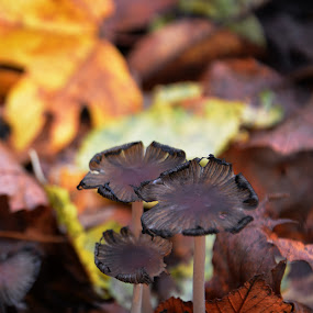 by Pixelle Tasouir - Nature Up Close Mushrooms & Fungi ( marron, champignons, automne, jaune,  )
