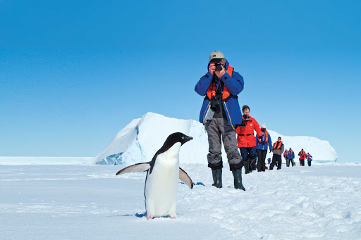 While hiking in Antarctica on a Lindblad expedition, have an up-close encounter with an Adelie penguin.