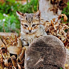 Cat you see me? by John Bonanno - Animals - Cats Portraits