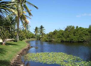 Photo: Queen Elizabeth II Botanic Park lake.  Photo: Ann Stafford, Mar.7, 2009