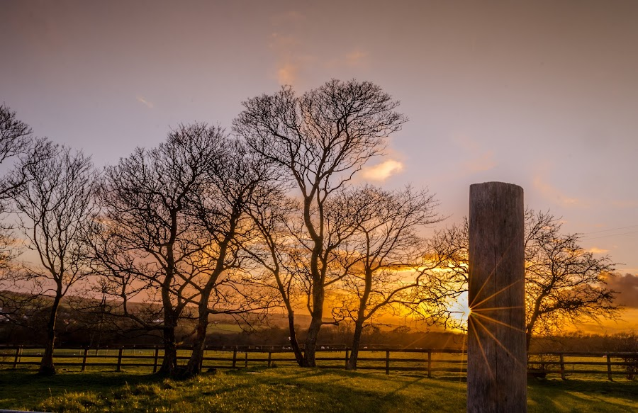 The sun and the meadow. by Arijit Sharma - Landscapes Sunsets & Sunrises ( shadow, sunset, landscape )