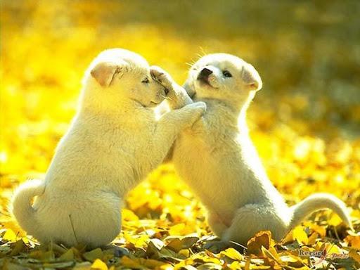 Love Animals Images