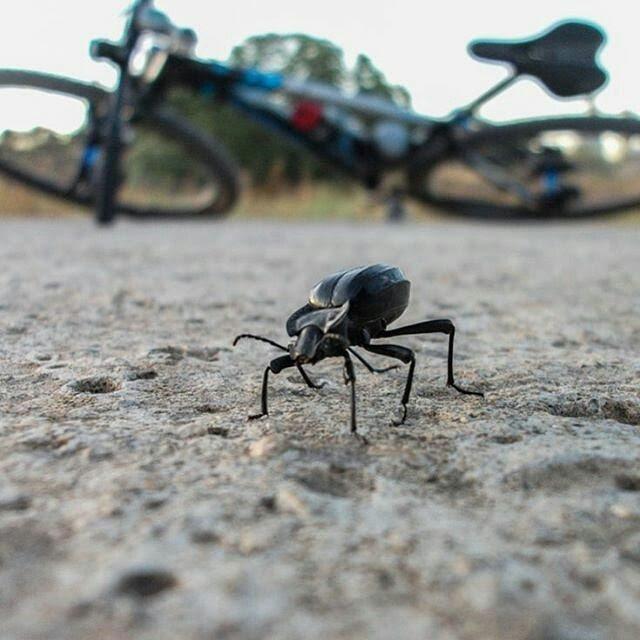 foto trek escarabajo