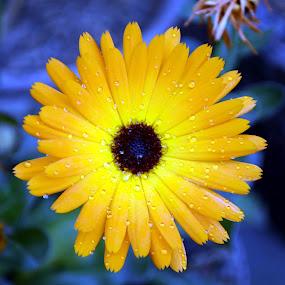 flower by Ganesh Shahi - Nature Up Close Flowers - 2011-2013