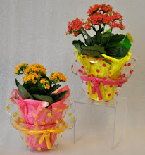 Photo: Blooming Plant in Pokadot Container, $20.00 each.