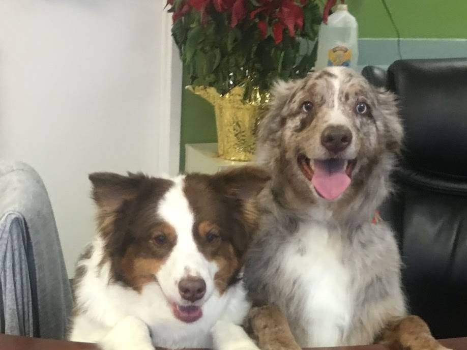 Petman grooming llc at petman grooming each day is filled with updates solutioingenieria Images