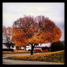 Photo: Enamorada del otoño, disfrutando los últimos días de colores