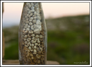 Photo: Garigue Woodlouse Genocide