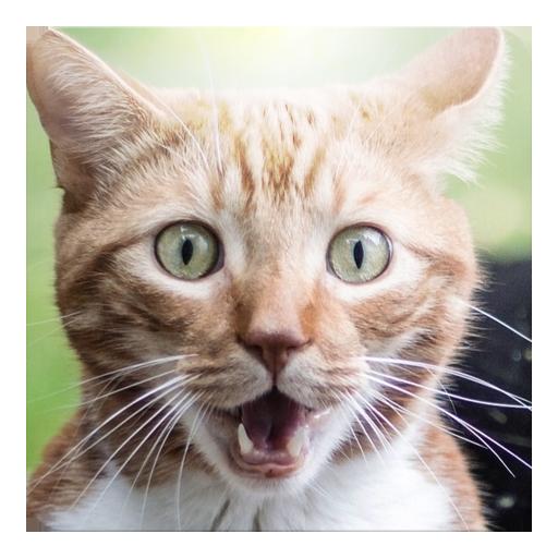猫猫咪声音小部件 娛樂 App LOGO-APP試玩