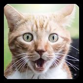 Cat kitty sound widget