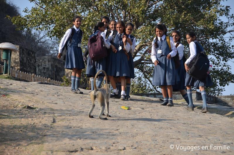 Kumbhalgarh, singes