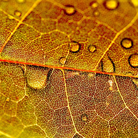 by Patrick Imbacher - Nature Up Close Leaves & Grasses