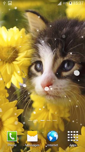 貓動態壁紙