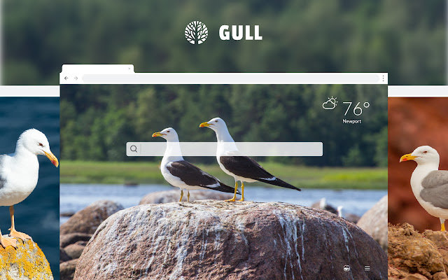 Gull HD Wallpapers New Tab