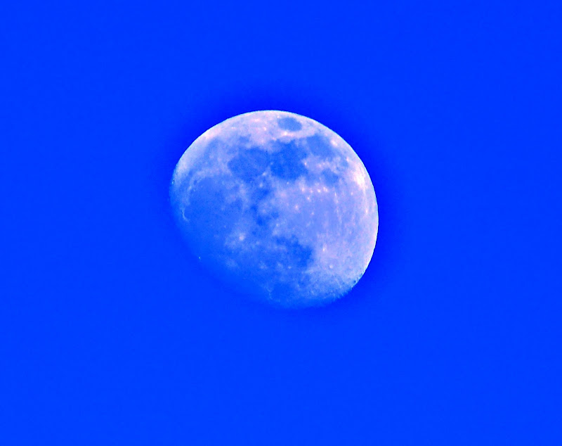 Blue Moon di Rinox