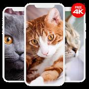 Best Cat Wallpapers Offline