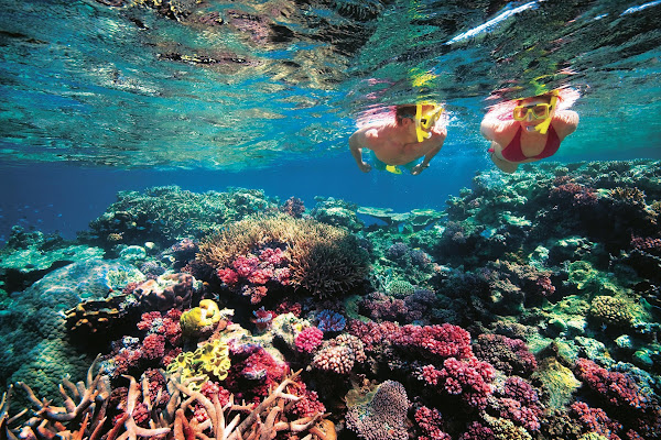 Snorkel at Ha Island with colourful coral and fish