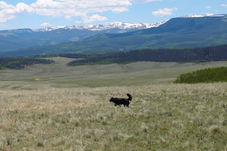 Photo: We drove S in Cochetopa Park, crossing the Colorado Trail and then over a slight divide into Saguache Park.  That slight divide is the Continental Divide which is usually more dramatic in Colorado.  Marco is enjoying our lunch stop.  The La Garita Mtns are in the back, with Table Mtn (R) and Sheep Mtn (L) in the middle distance.  We are headed to the other side of Sheep Mtn.