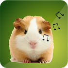 豚鼠声音 icon