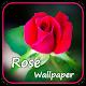 Rose wallpaper (app)