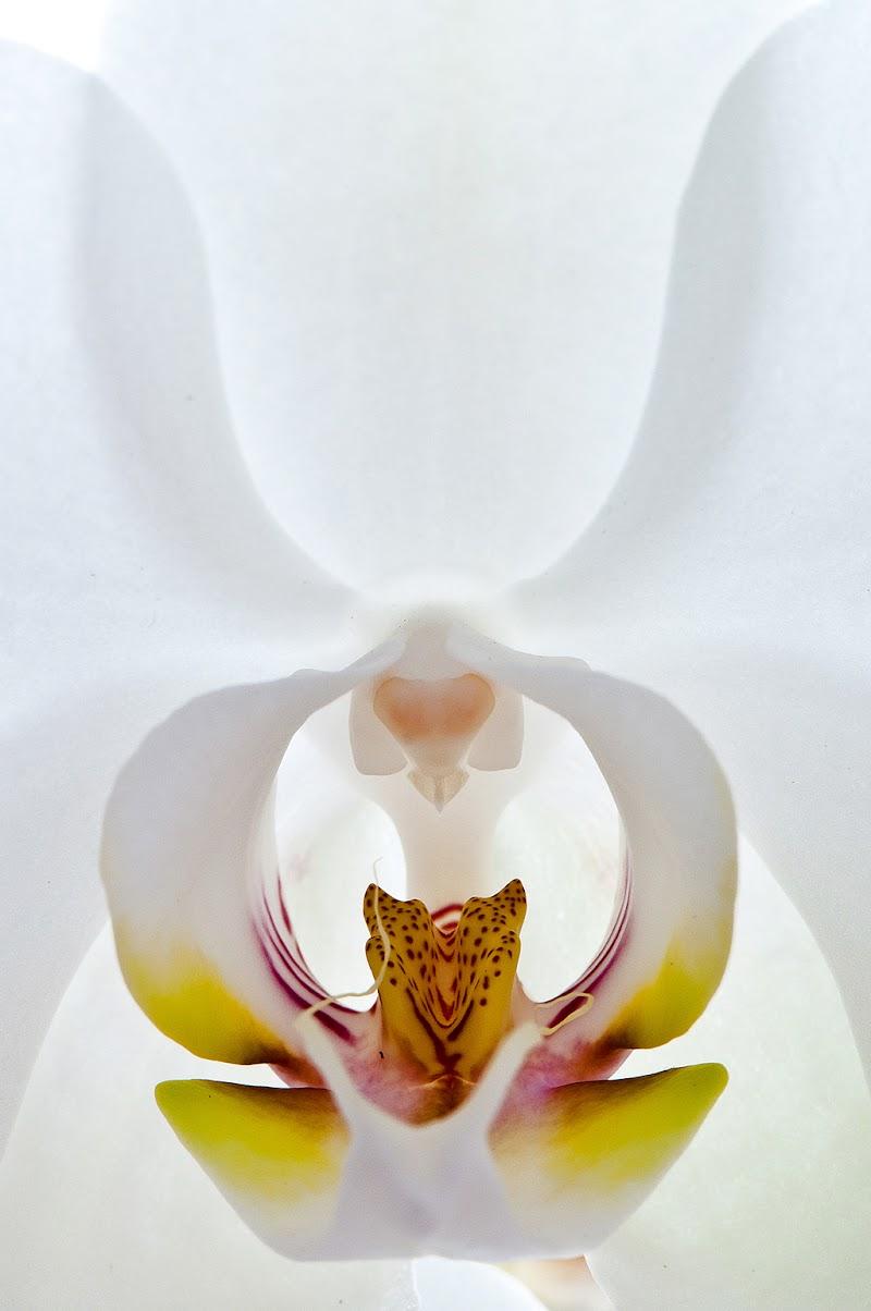 bianca delicatezza di tispery
