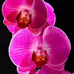 Orchidee by Salvatore Amelia - Nature Up Close Gardens & Produce
