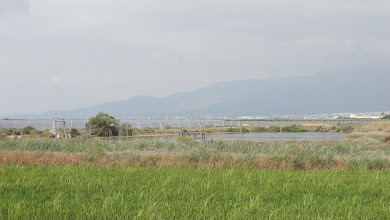 Photo: The Sierra Montsia shrouded in mist beyond the Deltebre lagoon
