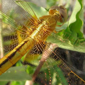 by Manav . - Animals Insects & Spiders