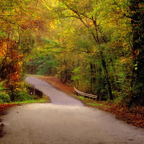 The Road Home by Stacey Nagy - Landscapes Forests ( roads in texas, autumn, country road )