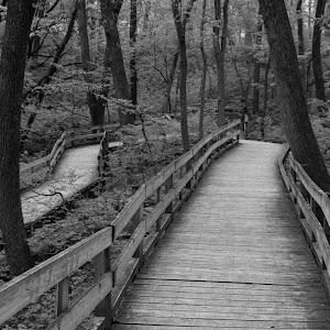 Walk Through the Woods.jpg