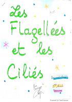 3-Les flagellées et les ciliés resumé.pdf