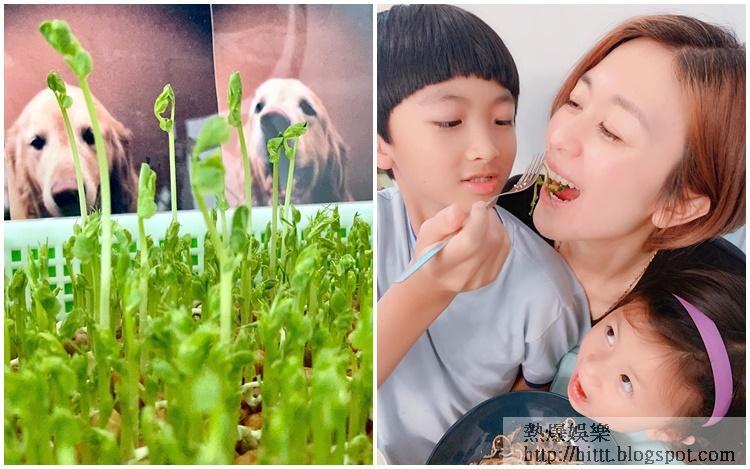 唐寧教一對小朋友種完菜兼煮來食。