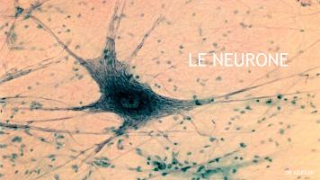 Neurone Dr.Adjouri.pptx