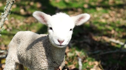 Weekly Mission Video - Where the Lambs Lead Church