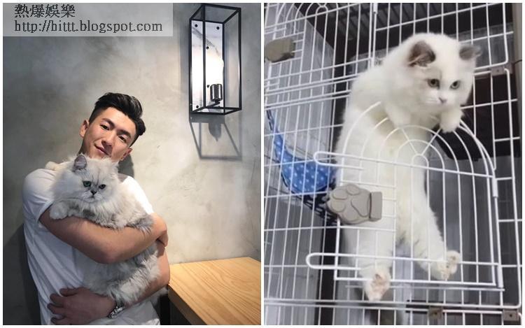 馬貫東愛貓病逝兩日,他分享MOOMOO小時候短片悼念。