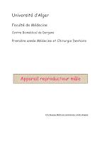 Appareil reproducteur mâle.pdf