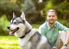 Weboldal készítés Állatorvos témában