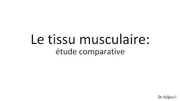 Tissu Musculaire.pptx