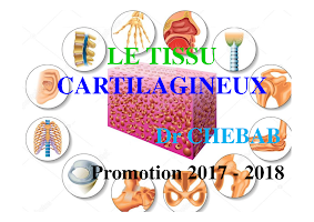 Diapo Tissu Cartilagineux (2017-2018).pdf