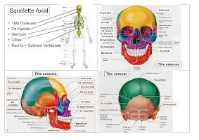 Schema Squlette axial.pdf