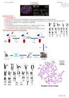 Cytogénétique.pdf