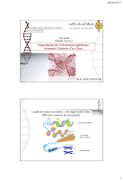 Cours l'organisation de l'information génétique-Anatomie generaled'un gene.pdf
