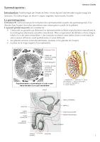 résumé Spermatogenèse.pdf