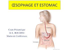 Oesophage et Estomac.pdf