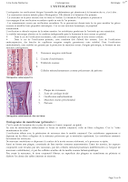 L'OSTEOGENESE.pdf